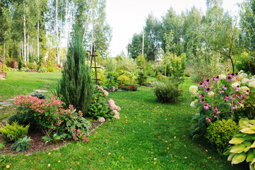 Papiers peints Pistache summer garden view with blooming perennials, Hydrangea paniculata, conifers, hostas. Cottage garden style