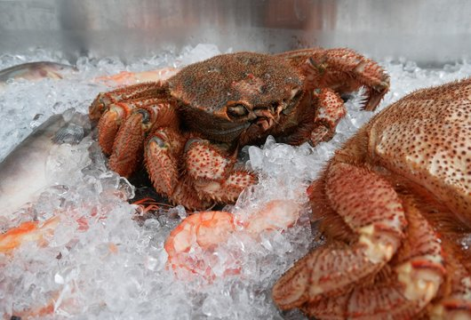 A large hairy crab is lying on crushed ice on the store counter. Healthy seafood is prepared for sale.