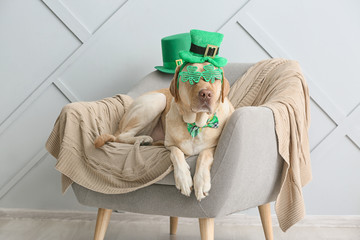 Cute dog with green hat on armchair. St. Patrick's Day celebration Wall mural