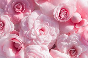 Fotomurales - Camellia. Flowers background. Pink blooming spring pattern.