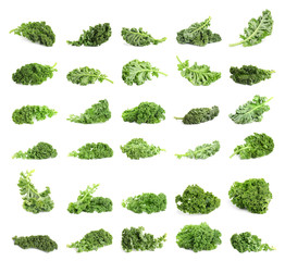 Set of fresh green kale leaves on white background