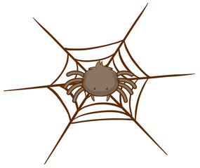 Spider on web on white background