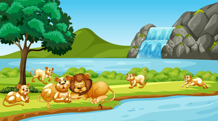 Scene with lions in the park