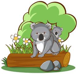Foto op Canvas Kids Koala on log on white background