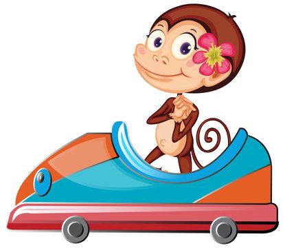 Cute monkey riding on toy car