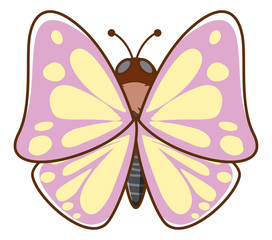 Pink butterfly on white background