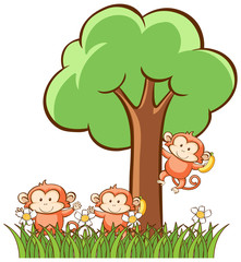 Monkeys on white background