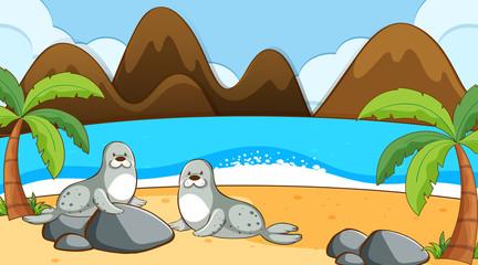 Foto op Aluminium Kids Seals on the beach