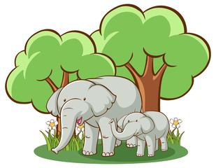 Elephants on white background