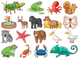 Fond de hotte en verre imprimé Jeunes enfants Large set of wildlife with many types of animals