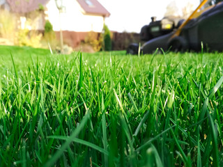 Photo sur Aluminium Vert Spring season sunny lawn mowing in the garden. Lawn blur with soft light for background.