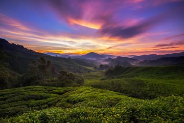 Cameron Highlands Tea plantations sunrise