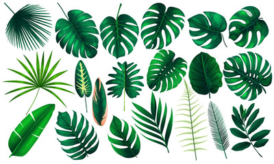 Vector realistic illustration set of tropical leaves and flowers isolated on white background. Highly detailed colorful plant collection. Botanical elements for cosmetics, spa, beauty care products Wall mural