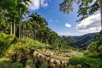Fort de France, Martinique, FWI - Royal palm trees in Balata gardens