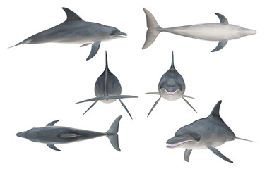 Multiple angle views of bottlenose dolphin with 6 different view isolated white background 3d rendering