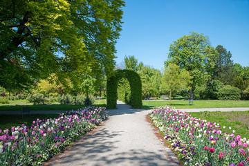 Wall Mural - Tulpenbeet und grüner Bogen im Rosengarten, Spazierwege im Münchner Stadtpark Untergiesing im Frühling