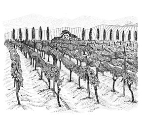 Door stickers White Vineyard landscape with building of farm, trees beside and mountains. Hand drawn horizontal sketch vector illustration isolated on white