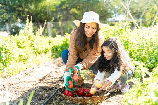 Women Harvesting Vegetables At Farm