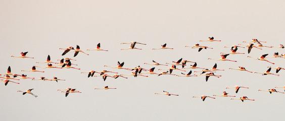 Papiers peints Oiseau flock of flamingos