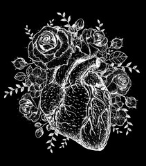 Heart and rose flower hand drawn sketch. Vintage vector illustration. Anatomical heart. Isolated black and white heart illustration. Engraved style.