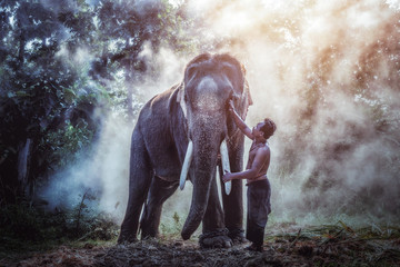Thailand The mahout man and elephant in wild this is lifestyle of people in surin province Thailand.