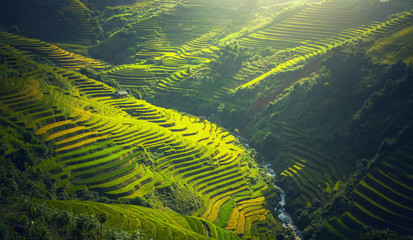 Foto auf Acrylglas Reisfelder Rice fields on terraced of Mu Cang Chai, YenBai, Vietnam. Rice fields prepare the harvest at Northwest Vietnam. Vietnam landscapes.