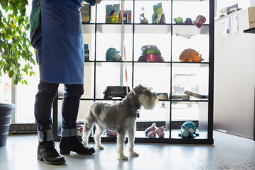 Dog daycare owner with schnauzer in lobby