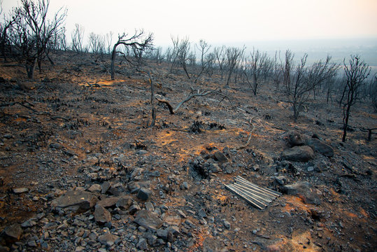 Bush Fire Devastation in Australia
