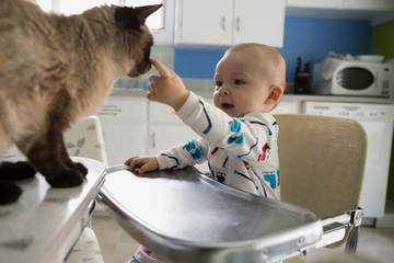 Baby boy high chair petting cat kitchen