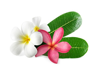 Zelfklevend Fotobehang Frangipani Frangipani flowers with leaves isolated on white