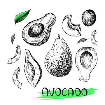 Avocado. Set of hand-drawn avocado in sketch style. Black vector illustration isolated on white