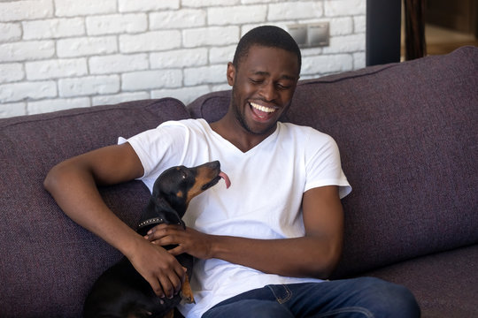 Smiling black guy relax on sofa playing with dackel dog