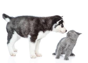 Husky puppy snifs scared kitten. isolated on white background