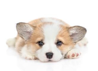 Sad Pembroke Welsh Corgi puppy looks at camera. isolated on white background