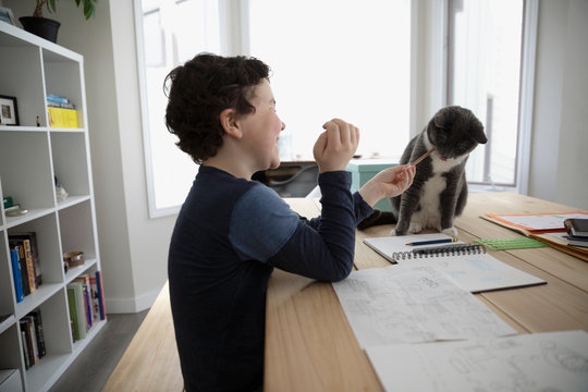 Boy with pencil drawing, playing with cat on dining table