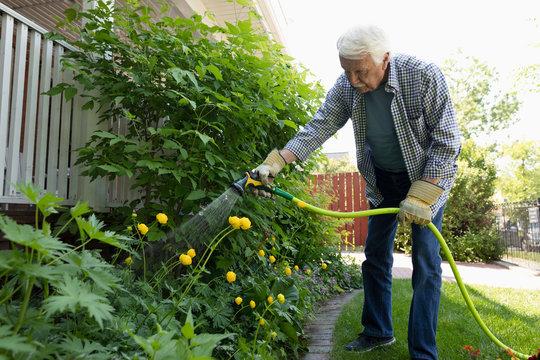 Senior man with hose watering garden
