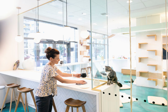 Woman drinking coffee at cat cafe