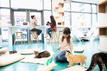 Girl playing with cats in cat cafe