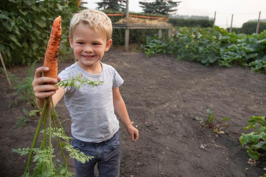 Portrait cute boy holding fresh harvested carrot in rural vegetable garden