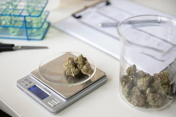 Marijuana buds on scale