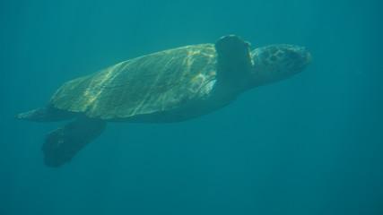 tortue photo sous marine