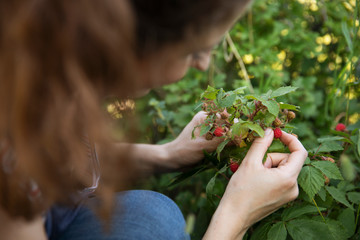 Young woman picking wild berries from plant Fototapete