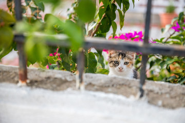Kleine süße Katze Katze