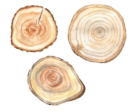 Watercolor slices of wood.