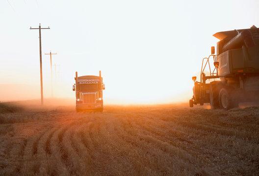 Semi-truck and combine harvester in sunny field