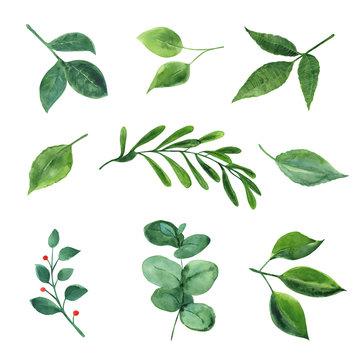 Watercolor green plants.
