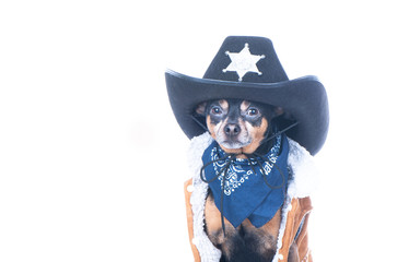 Sheriff dog portrait isolated on white
