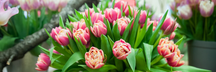 Fotorolgordijn Tulp Banner Spring flowers background bunch of colorful tulips , Hello Spring and Woman day concepts