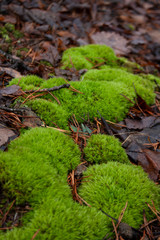 Moss Growing on Forest Floor