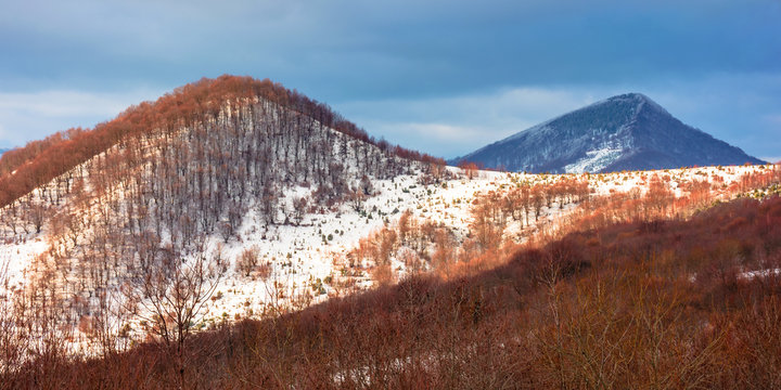 beautiful winter landscape in mountains. afternoon scenery of Uzhanian National Nature Park, ukraine. leafless trees on snow covered top of a hill. dramatic weather with cloudy sky